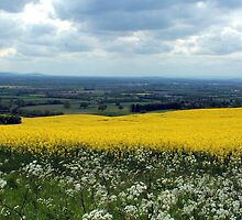 Follow the Yellow Brick Road by Simon Brown
