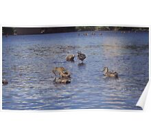 Water Fowl Poster