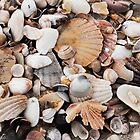 Shell detail by pommieken