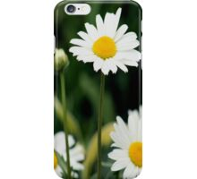 Shasta Daisies  iPhone Case/Skin