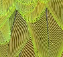 Close Up of Harlequin Macaw Bird's Feathers In Green  Sticker
