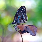 Blue Butterfly by Renee Hubbard Fine Art Photography