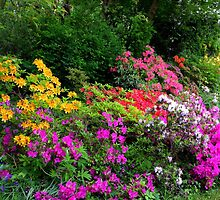 colorful rhododendrons by supergold