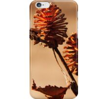 Mini Pine Cone iPhone Case/Skin