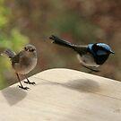 My little birdie  friends by Denzil