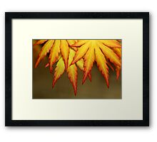 Branch for Peace Framed Print