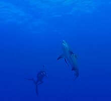 Bullshark and Underwater Photographer by Fiona Ayerst