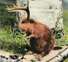 The Antler Beaver by Bill Blair