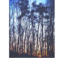 Sunrise/Sunset Woods Photographic Print