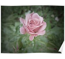 Long Stem Rose Poster
