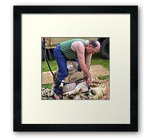 Sheep Shearer at Stockland Fair, Devon.uk Framed Print