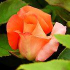 Pretty Rose by WildestArt