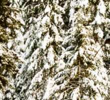 Photo of Snow Covered Pine Trees Sticker