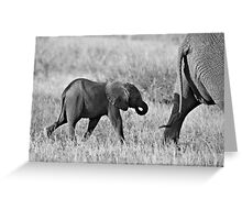 African Elephants (Loxodonta africana) Greeting Card