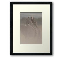 African Elephants (Loxodonta africana) Framed Print