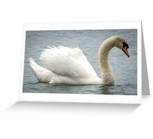 Majestic Male Mute Swan Greeting Card