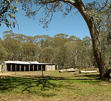 Joe Mortelliti Gallery - Lovick's Hut, on Barclay's Flat near Mt Lovick, alpine Victoria, Australia.  by thisisaustralia