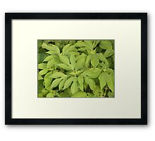leaves Framed Print