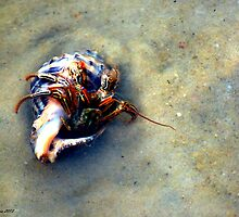 Hermit Crab by bgsigns