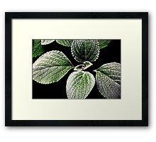 sage foliage.. Framed Print
