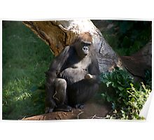 Gorilla - Grumpy Poster