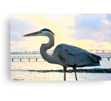 Heron Profile Canvas Print