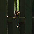 Fenced In 2 by Jason Lee Jodoin
