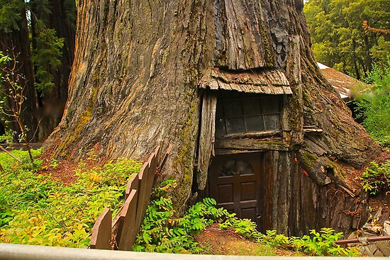 A Hobbit House? by Barbara  Brown