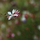 Butterfly Bush by Jeanette Varcoe.