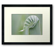 spring wrinckles Framed Print
