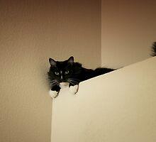 Cat mountain by Lynn Starner