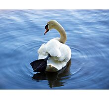 Serenity of the Swan Photographic Print