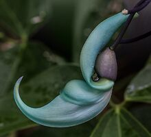 Jade Vine-Emerald Creeper by printsbypixie