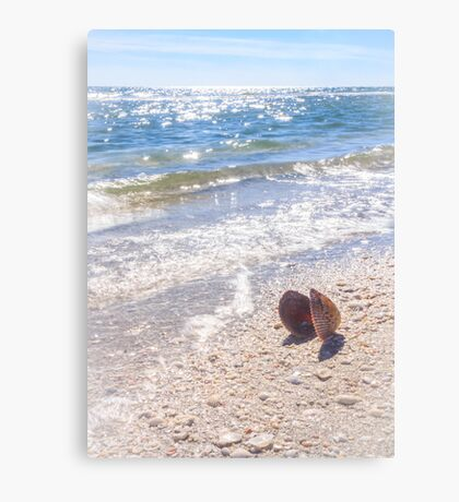Summertime Seashell Canvas Print