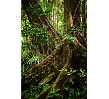 Daintree Rainforest - Mossman Gorge I Photographic Print