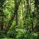 Daintree Rainforest - Mossman Gorge II by Richard Heath