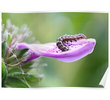 Beautiful Caterpillar (3) Poster
