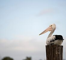 Pelican Perch by Jenny Dean