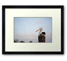 Pelican Perch Framed Print