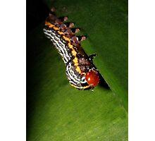 Caterpillar (2) Photographic Print