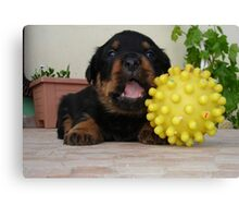Tiny Rottweiler Puppy Playing With Large Toy Ball Canvas Print