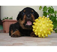 Tiny Rottweiler Puppy Playing With Large Toy Ball Photographic Print