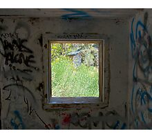 Looking through the window. Photographic Print