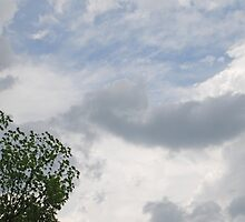 Storm Clouds - 5/30/13  by Vonnie Murfin