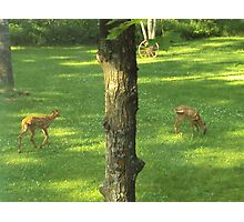 Deer Twins Having Snacks Photographic Print