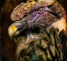 Finer Feathered Friends: Andean Condor by alan shapiro