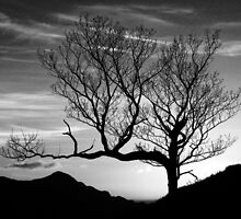 The Mono Tree by caledoniadreamn