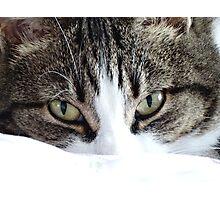 Cute cat  |  close - up Photographic Print