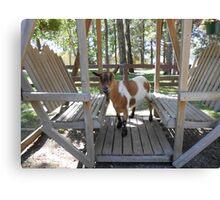 Swinging Goat Canvas Print