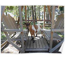 Swinging Goat Poster